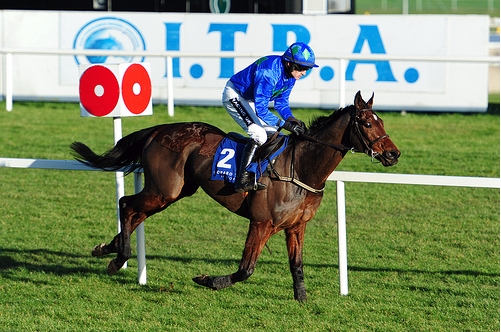 Hurricane Fly winning at Leopardswtown