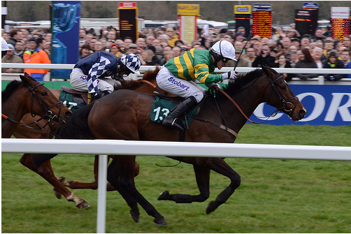 Cheltenian a cracking bet for County Hurdle – Cheltenham 2014